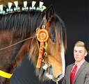 Schumanns Eragon National Champion Stallion 2015