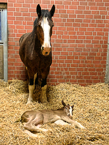 the first foal in 2018,- Schumanns Jodie