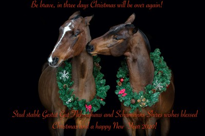SCHUMANNS SHIRES AND STUD FARM GUT FLEHINGHAUS WISH YOU MERRY CHRISTMAS AND A HAPPY NEW YEAR 2020!